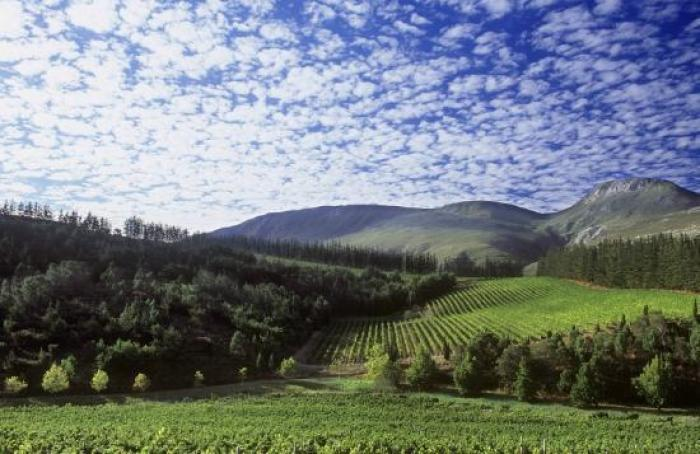Paul Cluver Wine Estate, a tour attraction in Cape Town, Western Cape, South