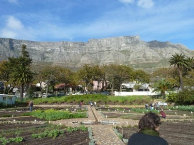 Oranjezicht City Farm , a tour attraction in Cape Town, Western Cape, South