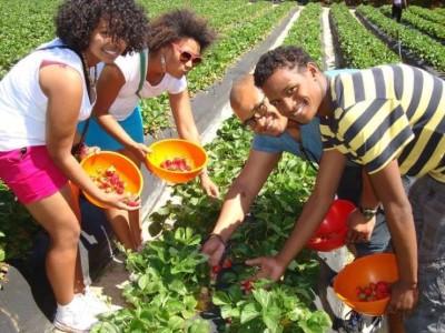 Polkadraai Farm, a tour attraction in Cape Town, Western Cape, South