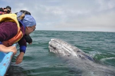 Whale Watching, a tour attraction in Cape Town, Western Cape, South