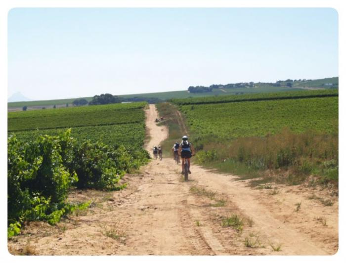 Mountain Bike Wine Tasting, a tour attraction in Cape Town, Western Cape, South