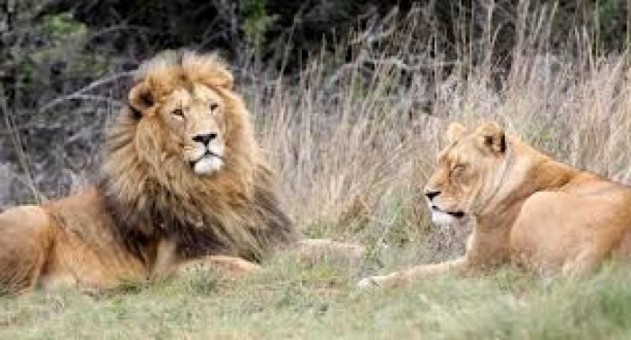 Krugersdorp Game Reserve , a tour attraction in EGoli iNingizimu Afrika