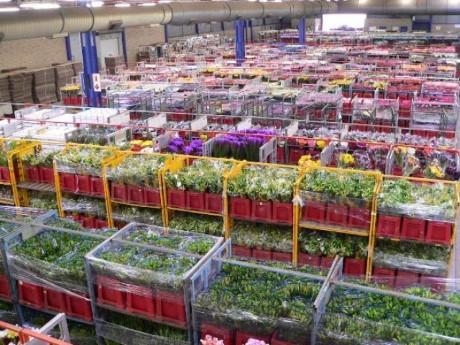 Multiflora Flower Market, a tour attraction in Johannesburg, Gauteng, South A