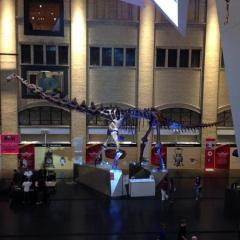 Royal Ontario Museum - ROM Governors, a tour attraction in Toronto Canada