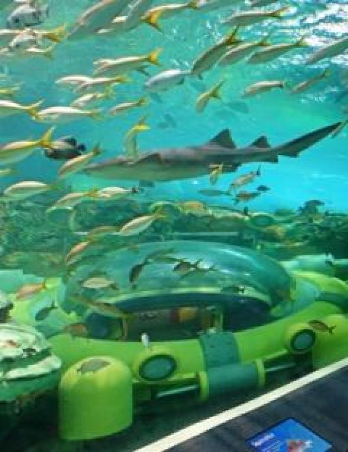 Ripley's Aquarium of Canada, a tour attraction in