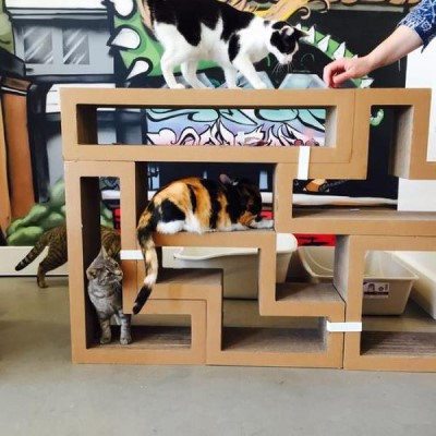 Cat Town Cafe, a tour attraction in Oakland United States