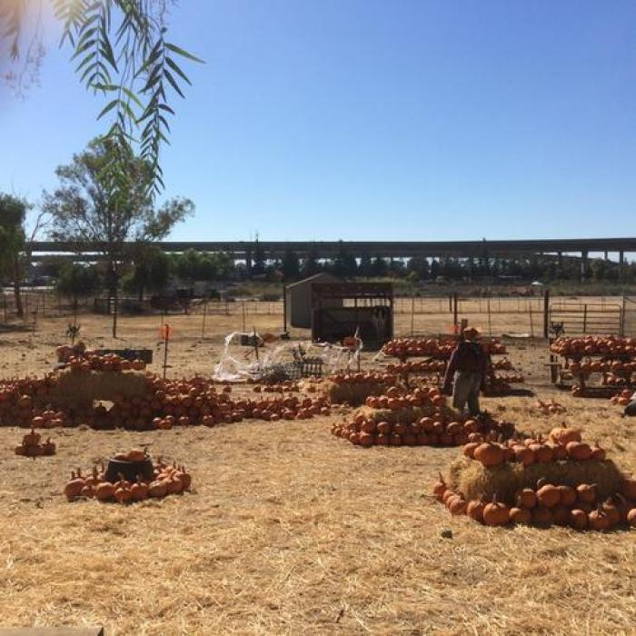 Emma Prusch Farm Park, a tour attraction in San Jose United States