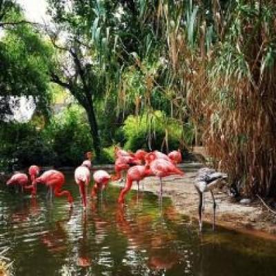 ABQ BioPark Zoo, a tour attraction in Albuquerque United States