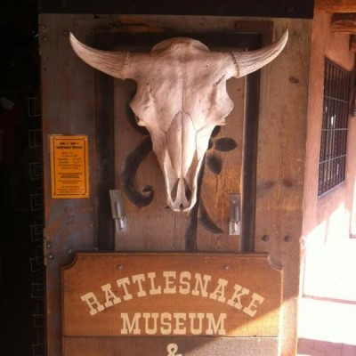 The Rattlesnake Museum, a tour attraction in Albuquerque United States