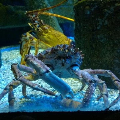 Bristol Aquarium, a tour attraction in Bristol, United Kingdom
