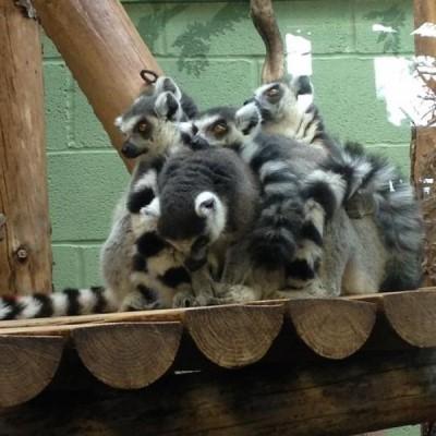 Bristol Zoo & Gardens, a tour attraction in Bristol, United Kingdom