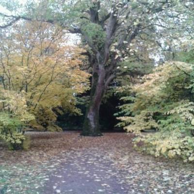 Westonbirt Arboretum, a tour attraction in Bristol, United Kingdom