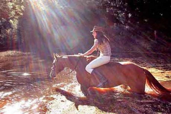 Bozzola Equestria, a tour attraction in The Garden Route South Africa