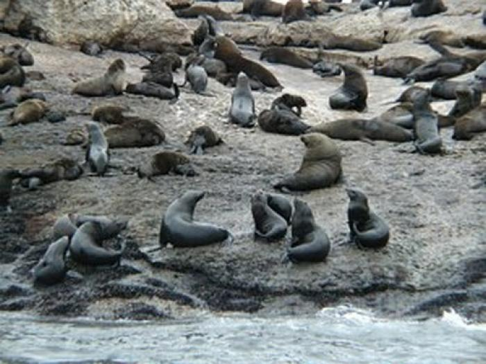 Seal Island, a tour attraction in The Garden Route South Africa