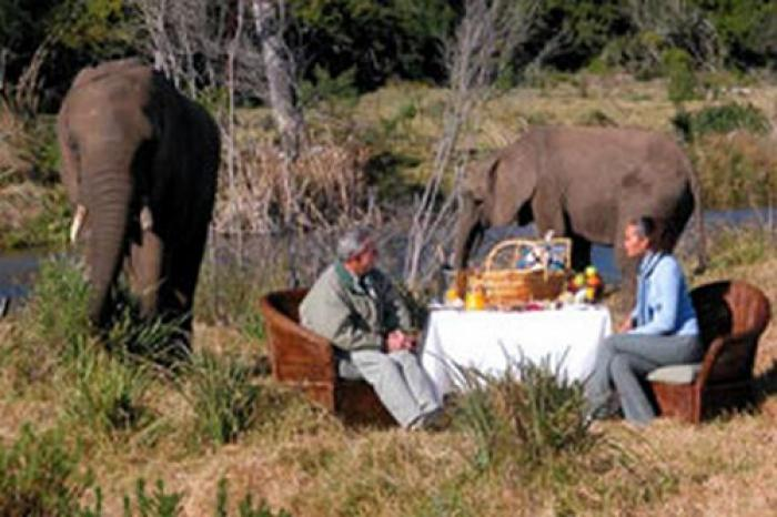 Picnic with the elephants, a tour attraction in The Garden Route South Africa