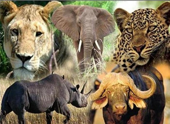 See the Big Five, a tour attraction in The Garden Route South Africa