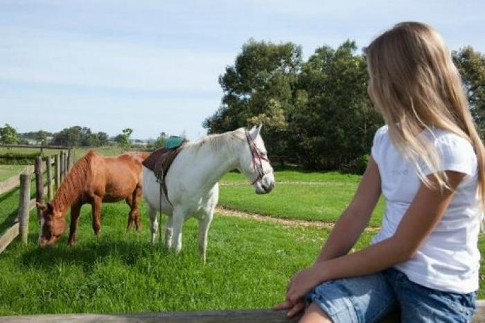 Redberry Farm pony ride, a tour attraction in The Garden Route South Africa