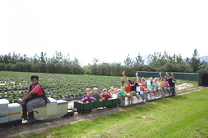 Redberry Farm minitrain ride, a tour attraction in The Garden Route South Africa