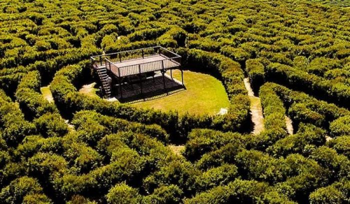 Redberry Farm Maze, a tour attraction in The Garden Route South Africa