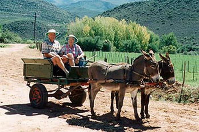Wilgewandel Holiday Farm, a tour attraction in The Garden Route South Africa