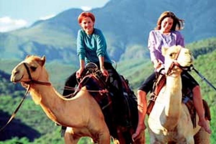 Wilgewandel Camel ride, a tour attraction in The Garden Route South Africa
