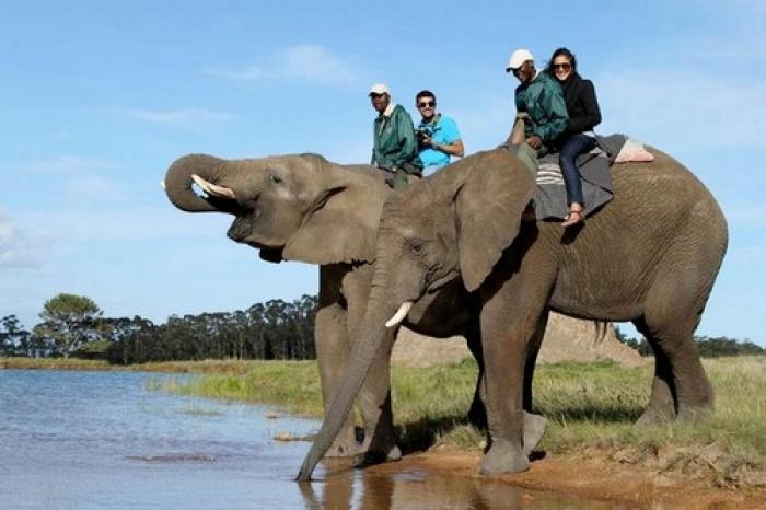 Knysna Elephant Park, a tour attraction in The Garden Route South Africa