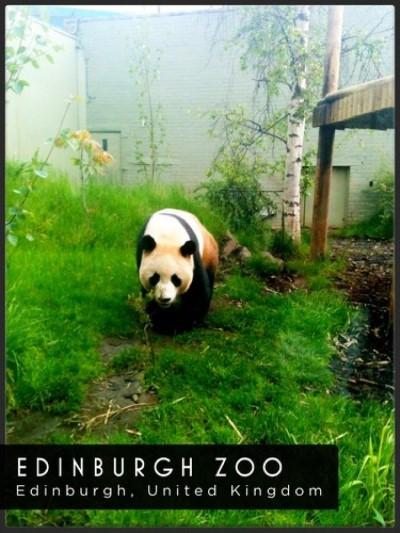 Edinburgh Zoo, a tour attraction in Edinburgh, United Kingdom