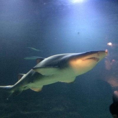 Deep Sea World, a tour attraction in Edinburgh, United Kingdom