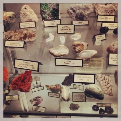 Mr Wood's Fossils, a tour attraction in Edinburgh, United Kingdom