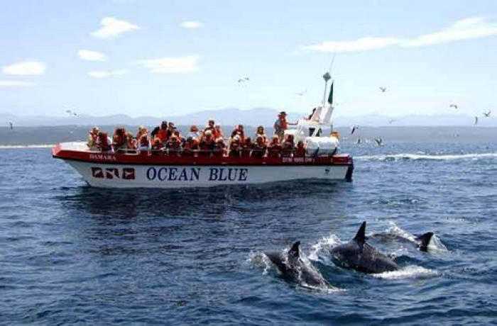 Dolphin and whale watching Plettenberg Bay, a tour attraction in The Garden Route South Africa