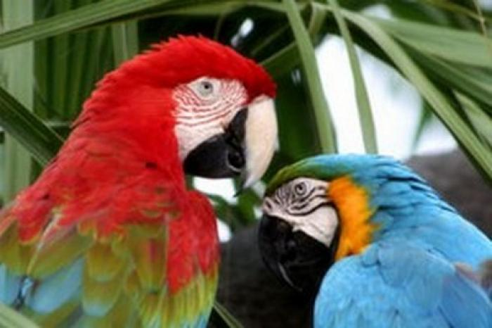 Birds of Eden Plettenberg Bay, a tour attraction in The Garden Route South Africa