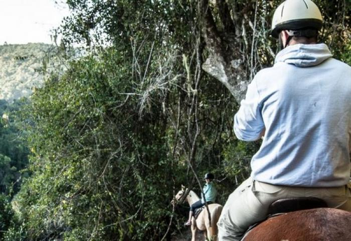 The Hog Hollow Horse Trails, a tour attraction in The Garden Route South Africa