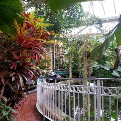 Birmingham Botanical Gardens & Glasshouses, a tour attraction in Birmingham, United Kingdom