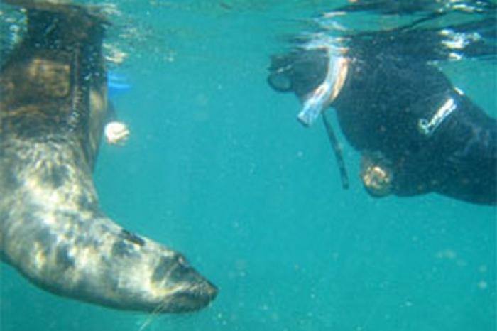 Swim with the Seals, a tour attraction in The Garden Route South Africa