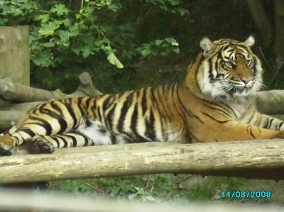 Dudley Zoo & Castle, a tour attraction in Birmingham, United Kingdom