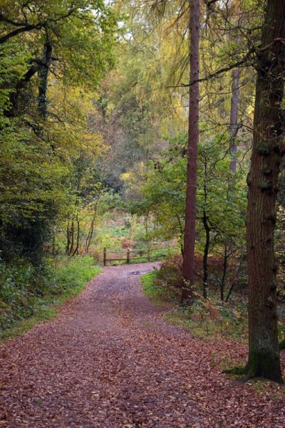 Lickey Hills Country Park, a tour attraction in Birmingham, United Kingdom
