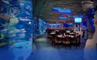 Austin Aquarium, a tour attraction in Austin, TX, United States