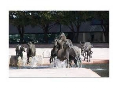 Mustangs of Las Colinas, a tour attraction in Dallas, TX, United States