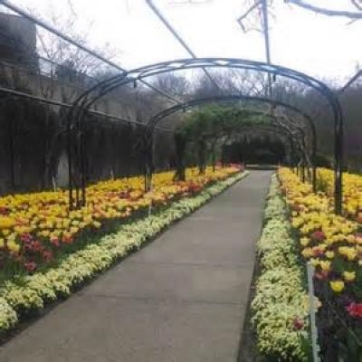 Cheekwood Botanical Garden, a tour attraction in Nashville, TN, United States