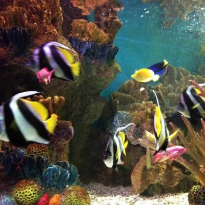 New England Aquarium, a tour attraction in Boston, MA, United States